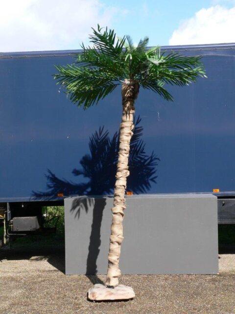Palmboom op voet -